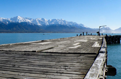 2 Day Kaikoura Marine Wildlife Tour