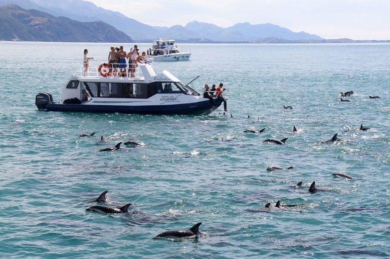 Kaikoura coast wildlife viewing