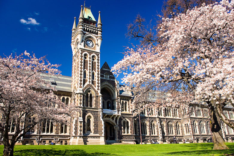 The University of Otago Registry Building amongst blossoming trees