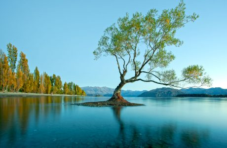 Wanaka, South Island Tours
