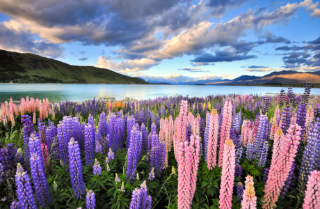 15 Day Classic New Zealand Explorer Guided Tour