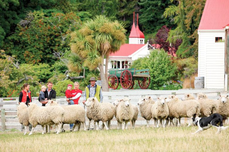 Sheep display, Walter Peak, Queenstown