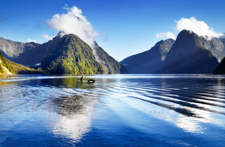 Tours of New Zealand