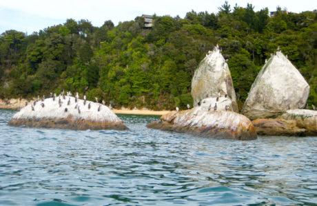 9 Day Abel Tasman Whales and Wildlife