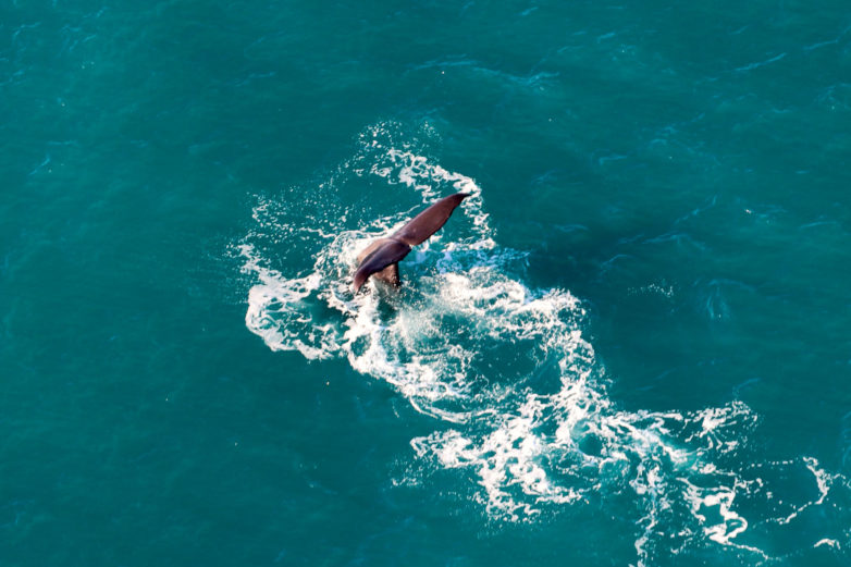 Wings Over Whales, Kaikoura