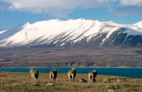 14 Day New Zealand Marvel Guided Tour