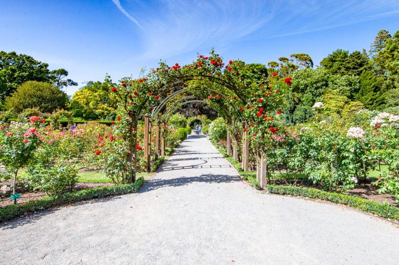 Christchurch Botanical Gargens