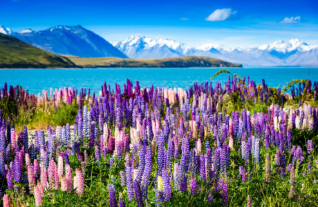 Lake Tekapo, south Island Tours