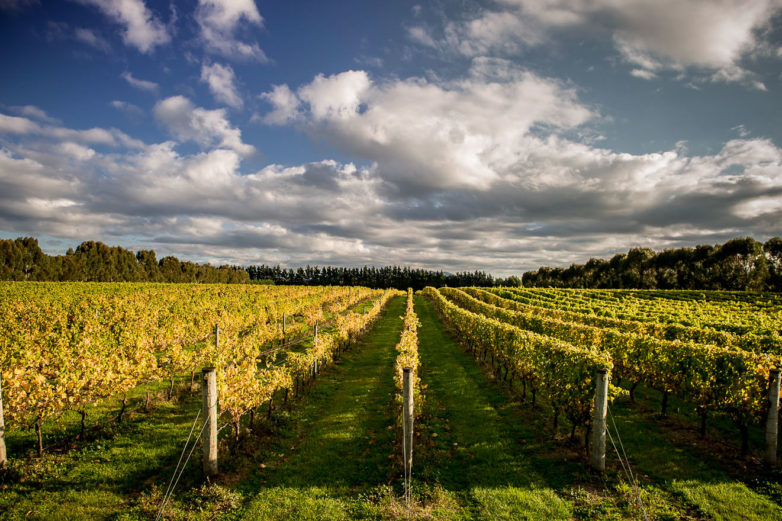 Martinborough Wine Tasting