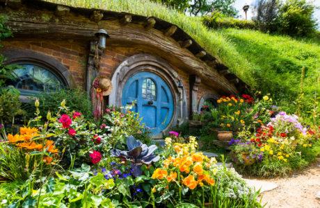 Hobbiton and Waitomo Experience
