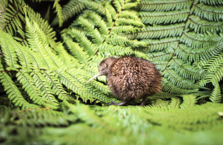Rotorua Sights, Gondola and Lunch Tour