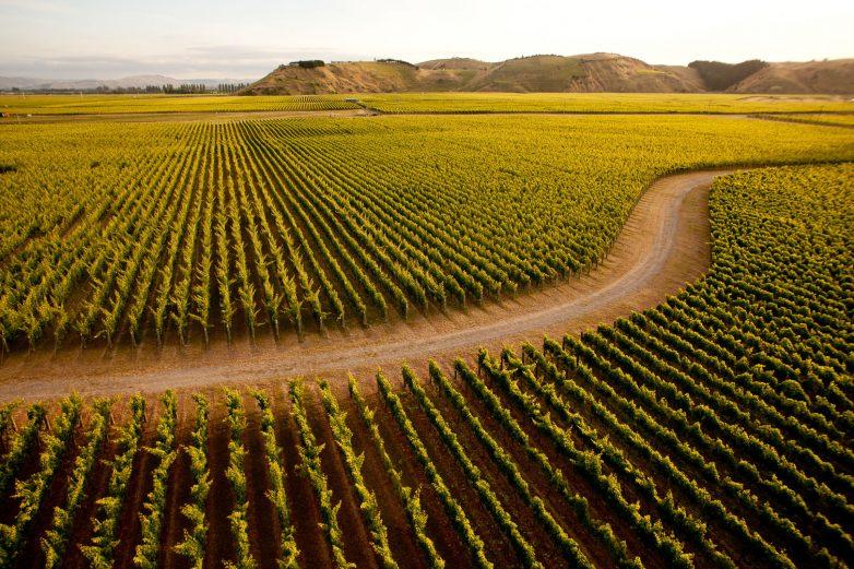 Napier Vineyards